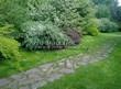 Садовая дорожка из плитняка (камень-пластушка, швы с травой) - 123