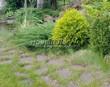 Садовая дорожка из плитняка (камень-пластушка, швы с травой) - 143