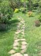 Садовая дорожка из плитняка (камень-пластушка, швы с травой) - 169