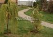 Садовая дорожка из песчаника (швы отсыпаны гравием) - 111