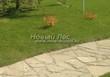 Садовая дорожка из песчаника (швы отсыпаны гравием) - 127