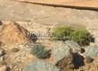 Садовая дорожка из песчаника (швы отсыпаны гравием) - 133
