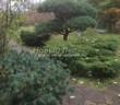Садовая дорожка из песчаника-пластушки (швы без наполнения) - 115