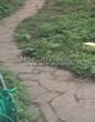 Садовая дорожка из песчаника-пластушки (швы без наполнения) - 117