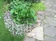 Садовая дорожка из песчаника-пластушки (швы без наполнения) - 126