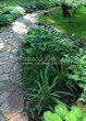 Садовая дорожка из песчаника-пластушки (швы без наполнения) - 136