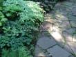 Садовая дорожка из песчаника-пластушки (швы без наполнения) - 137