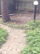 Садовая дорожка из песчаника-пластушки (швы без наполнения) - 139