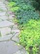 Садовая дорожка из песчаника-пластушки (швы без наполнения) - 142