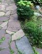 Садовая дорожка из песчаника-пластушки (швы без наполнения) - 144