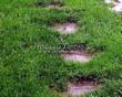 Пошаговая садовая дорожка из песчаника (плитняка) - 101