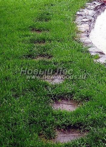 Пошаговая садовая дорожка из плитняка с большим расстоянием между отдельными камнями