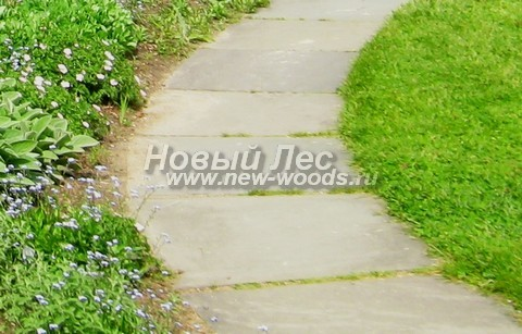 Садовая дорожка из каменных плит (слэбов) без бордюров, по ширине позволяющая пройти одному человеку