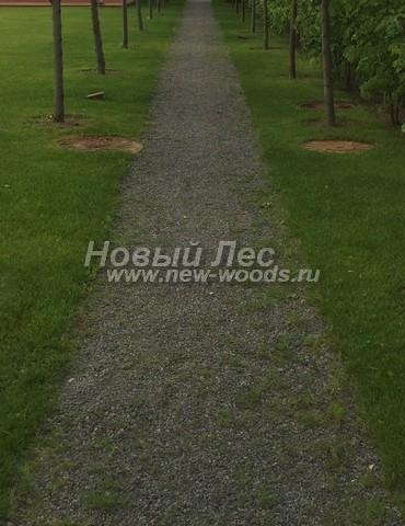 Садовая дорожка, являющаяся центром аллеи: гранитный отсев на стандартной подушке с невидимыми бордюрами