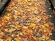 Деревянная садовая дорожка из досок (мостки из дерева) - 102