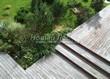Деревянная садовая дорожка из досок (мостки из дерева) - 109