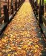 Деревянная садовая дорожка из досок (мостки из дерева) - 111