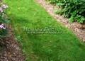 Садовая дорожка с травой (газонная дорожка)