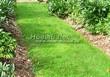 Садовая дорожка с травой (газонная дорожка) - 101