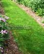 Садовая дорожка с травой (газонная дорожка) - 102