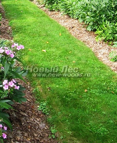 Садовая газонная дорожка - редкий, но красивый и естественный элемент, который можно обустроить в любом ландшафтном саду