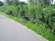 Асфальтовая садовая дорожка (покрытие из асфальта / асфальтобетона) - 104