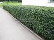 Асфальтовая садовая дорожка (покрытие из асфальта / асфальтобетона) - 106