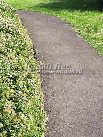 Небольшая садовая дорожка из серого асфальта, вдоль которой высажена живая изгородь из Спиреи японской