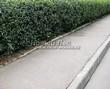 Асфальтовая садовая дорожка (покрытие из асфальта / асфальтобетона) - 111