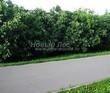 Асфальтовая садовая дорожка (покрытие из асфальта / асфальтобетона) - 113
