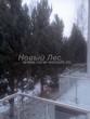Проект озеленения территории возле загородного дома в Московской области (этап первый - посадка крупномеров сосны обыкновенной): посадка по одной из сторон участка полностью завершена