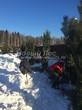 Ландшафтный проект в коттеджном поселке (зимняя посадка деревьев крупномеров Сосна обыкновенная по периметру участка, Московская область): промерзший грунт разбивается отбойниками и деревья устанавливаются в посадочные ямы