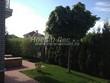 Живая изгородь из хвойных растений Туя западная Колумна (Thuja occidentalis 'Columna') - 104
