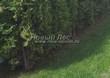 Живая изгородь из хвойных растений Туя западная Колумна (Thuja occidentalis 'Columna') - 107