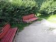 Живая изгородь из лиственных растений Жимолость Маака (Жимолость амурская) (Lonicera maackii) - 103