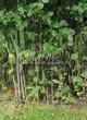 Живая изгородь из лиственных растений Ирга круглолистная (Amelanchier ovalis) - 104