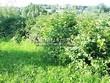 Живая изгородь из лиственных растений Калина обыкновенная (Viburnum opulus) - 113