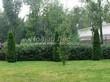 Свободно растущая живая изгородь из лиственных растений Кизильник блестящий (Кизильник остролистный разновидность блестящий) (Cotoneaster lucidus (Cotoneaster acutifolius var. lucidus)) - 107