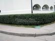 Стриженая живая изгородь из лиственных растений Кизильник блестящий (Кизильник остролистный разновидность блестящий) (Cotoneaster lucidus (Cotoneaster acutifolius var. lucidus)) - 306