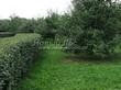 Стриженая живая изгородь из лиственных растений Кизильник блестящий (Кизильник остролистный разновидность блестящий) (Cotoneaster lucidus (Cotoneaster acutifolius var. lucidus)) - 312