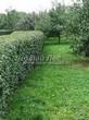 Стриженая живая изгородь из лиственных растений Кизильник блестящий (Кизильник остролистный разновидность блестящий) (Cotoneaster lucidus (Cotoneaster acutifolius var. lucidus)) - 319