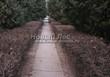 Стриженая живая изгородь из лиственных растений Кизильник блестящий (Кизильник остролистный разновидность блестящий) (Cotoneaster lucidus (Cotoneaster acutifolius var. lucidus)) - 323