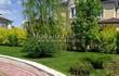 Живая изгородь из лиственных растений Пузыреплодник калинолистный (Physocarpus opulifolius) - 107