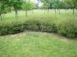 Живая изгородь из лиственных растений Спирея серая (пепельная) Грефшейм (Грефсхайм) (Spiraea x cinerea 'Grefsheim') - 107