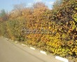 Стриженая живая изгородь из лиственных растений Боярышник однопестичный (Crataegus monogyna) - 302