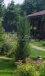 Хвойный крупномер Можжевельник скальный Блю Эрроу (Блу Арроу) (Juniperus scopulorum 'Blue Arrow') - 103