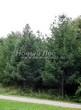 Хвойный крупномер Лиственница европейская (Лиственница опадающая) (Larix decidua) - 112