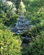 Хвойный крупномер Ель колючая Глаука Глобоза (Picea pungens 'Glauca Globosa') - 106