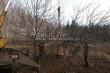 Лиственный крупномер Дуб черешчатый (Дуб обыкновенный) (Quercus robur) - 105