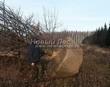 Лиственный крупномер Дуб черешчатый (Дуб обыкновенный) (Quercus robur) - 109